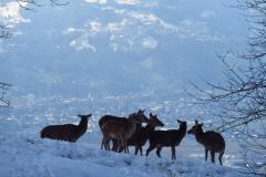 Alpentierpark am Pfänder