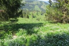 Falkenhütte Abstieg